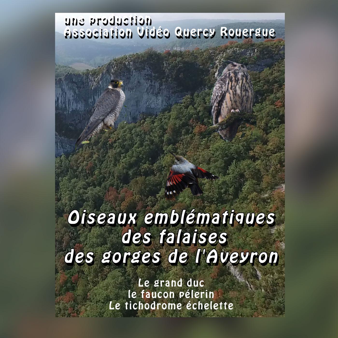 jaquette-oiseaux-des-falaises