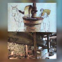 dvd--moulin-huile-noix