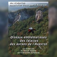 DVD oiseaux emblématiques des falaises des gorges de l'Aveyron